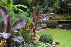 Vanaf 9,95 i.p.v. 39,95 | Een bijzondere bananenplanten-deal. Drie keuzeopties en 4 soorten!