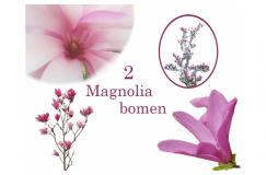 2 Schitterende Magnolia Bomen